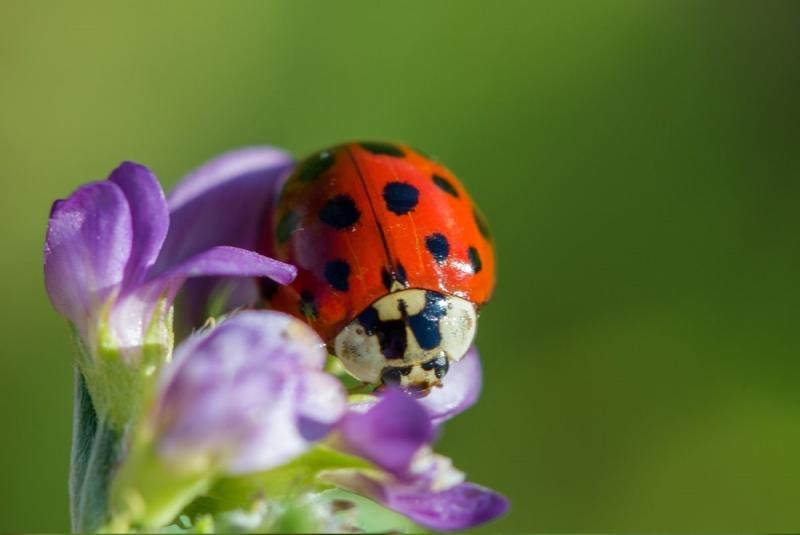 Favoriser la biodiversit h tel insectes prairies for Hotel a insecte coccinelle
