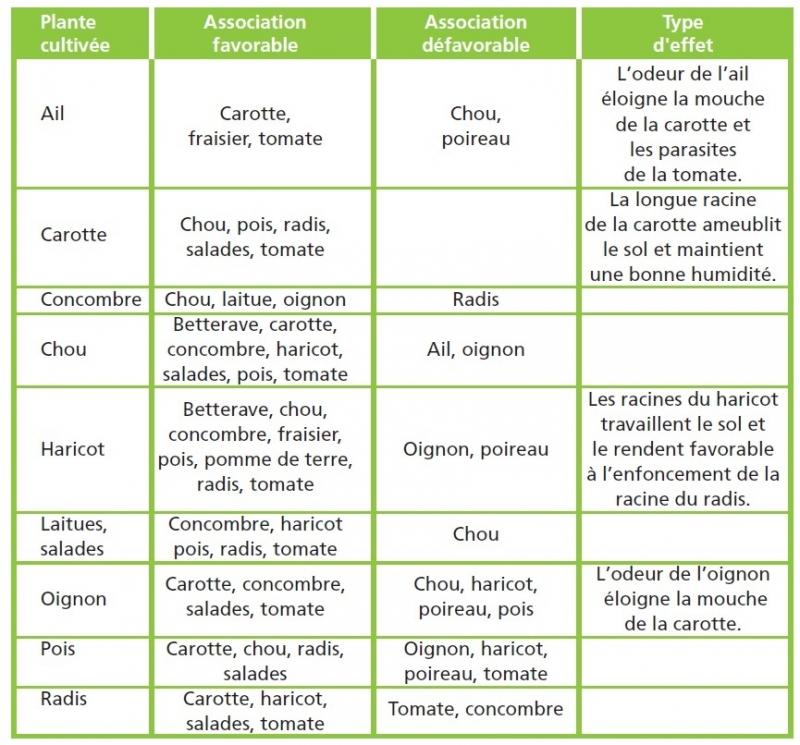 Des pratiques pour avoir des plantes en bonne sant - Association de legumes au potager ...