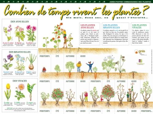 Connaisance des plantes for Jardinage le monde