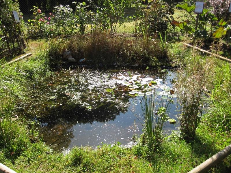 favoriser la biodiversit h tel insectes prairies fleuries et autres am nagements du jardin de. Black Bedroom Furniture Sets. Home Design Ideas