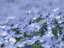 S quence p dagogique faire d couvrir les fleurs aux enfants - Fleur qui pousse vite ...