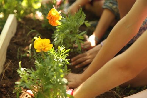 Jardinage : les travaux du mois de octobre