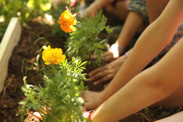 Jardinons l 39 cole for Plantation de fleurs