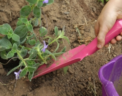 Quel outils pour jardiner