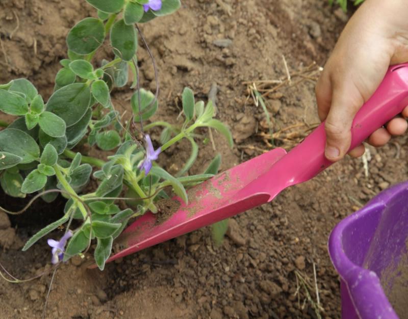 Choisir ses outils pour jardiner outils de jardin le of for Conseil pour jardiner